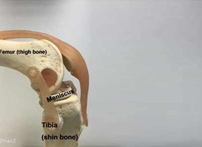 Normal Knee Anatomy- side view